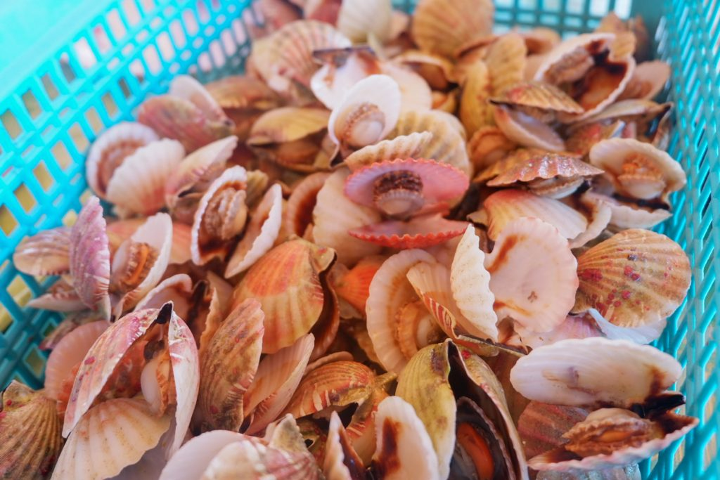 "ALT=""gigantes island scallops capital philippines"""