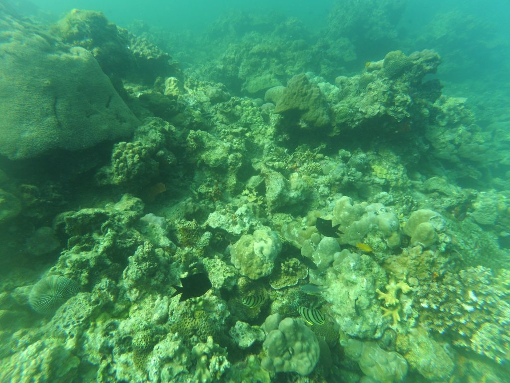 "ALT=""the corals under the sea in summer cruise batangas"""