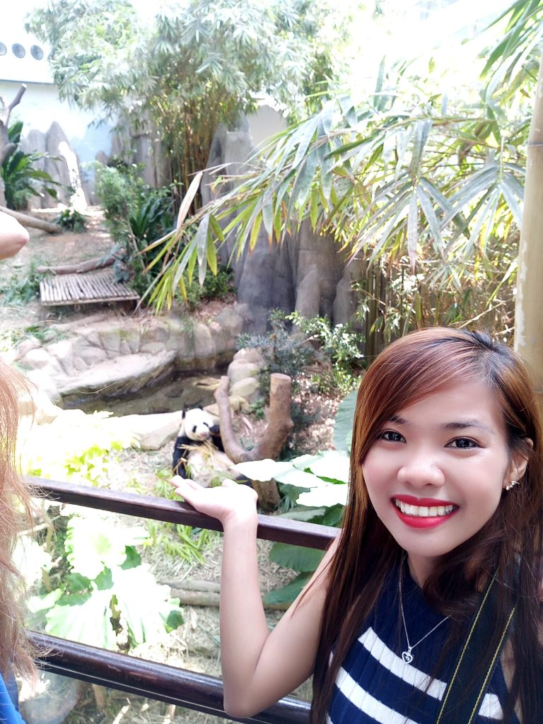 "ALT=""singapore travel guide and with the real panda at safari"""