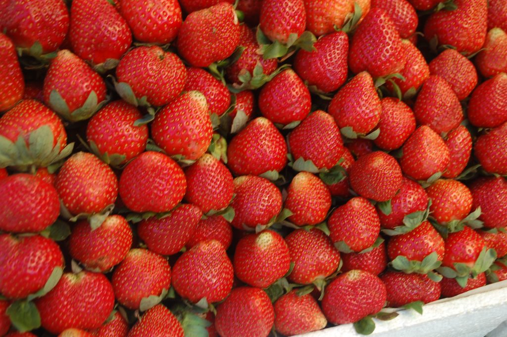 "ALT=""strawberries to eat in baguio city benguet"""