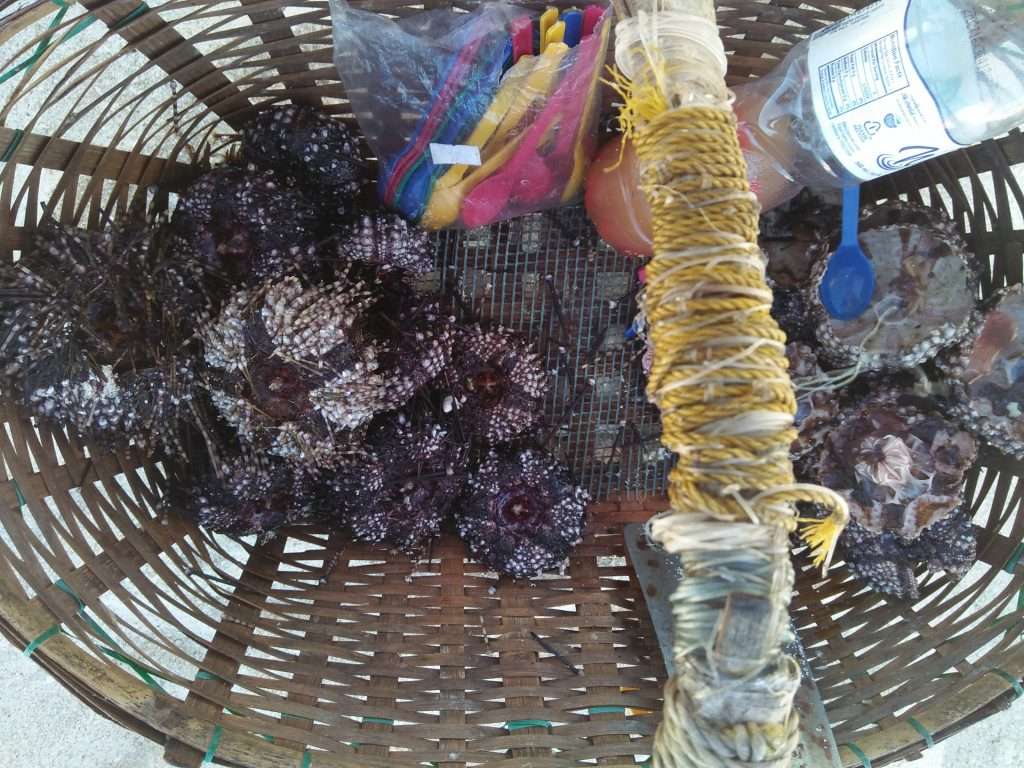 "ALT=""where to eat in camiguin sea urchin"""