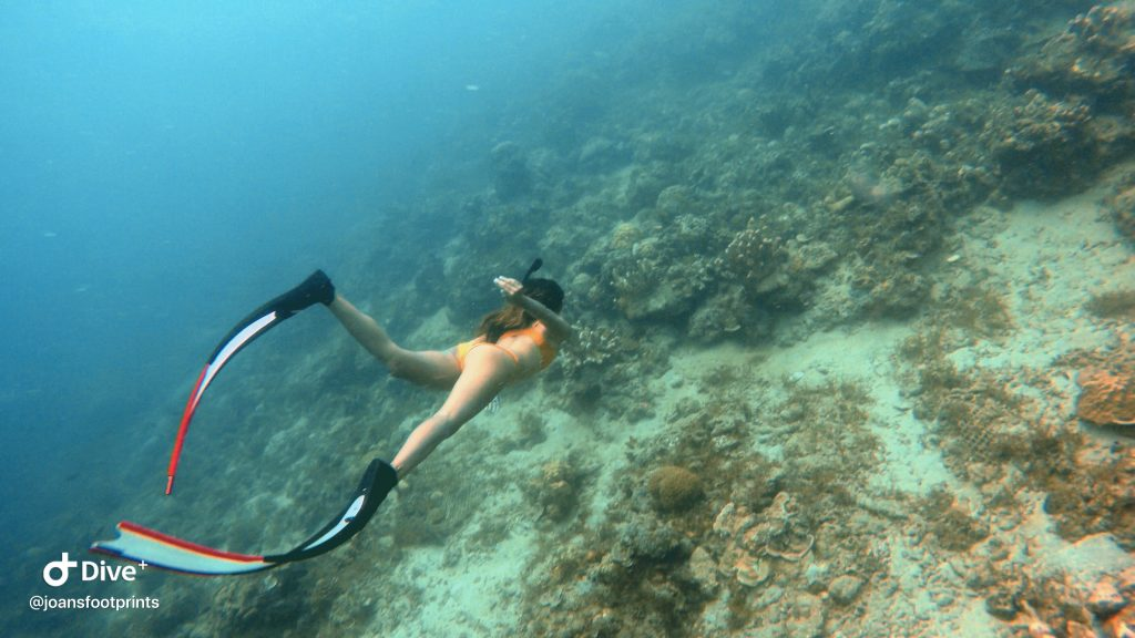 "ALT=""dive7000 batangas freediving and scuba diving"""