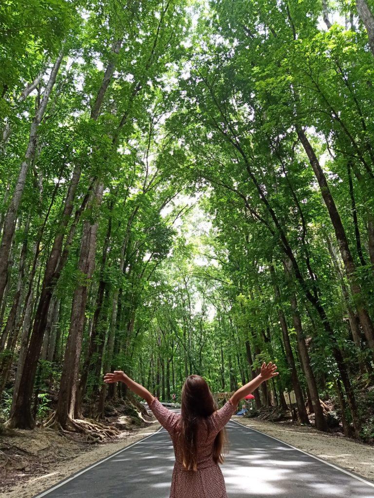 """ALT=""""bilar manmade forest central visayas"""""""